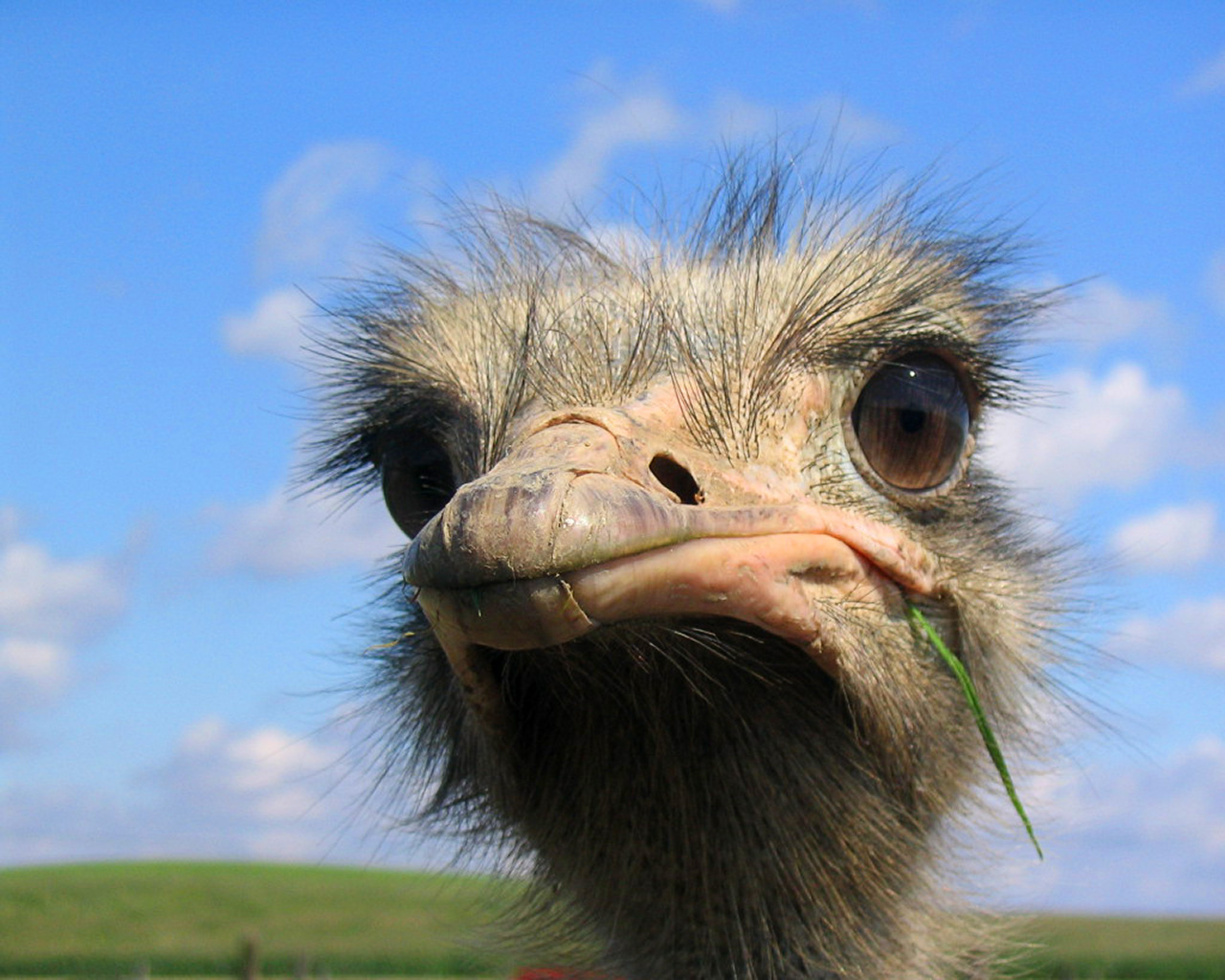 http://adlandcreative.files.wordpress.com/2010/02/ostrich1280x1024ls.jpg